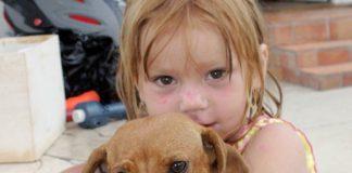 1_Dream Dogs.jpg