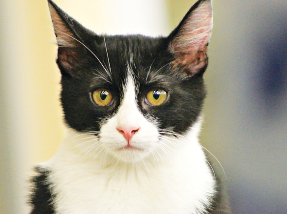 New San Diego Humane Society adoption center opens at East