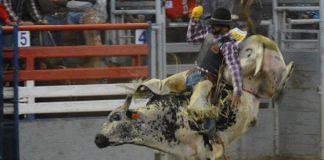 WEBBig Brother bullrider.jpg