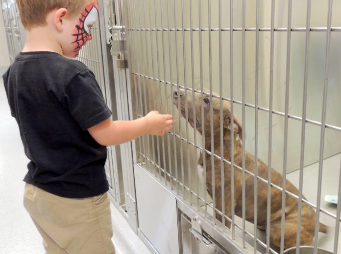 WEBA pit bull at the new El Cajon Animal Shelter gets some loving attention from 3-year-old Ryker Wittmayer, photo by Cynthia Robertson.jpg